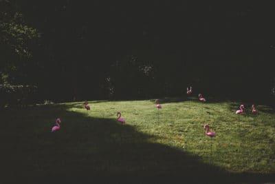 Flamingo's on your wedding,wedding en planning, weddingplanner, foto Laura Mölleman